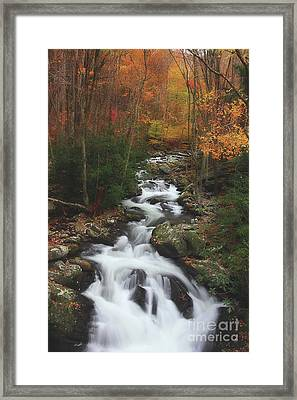 Exploring Autumn Framed Print by Michael Eingle