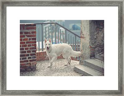 Exploring Historical Site Framed Print by Jenny Rainbow