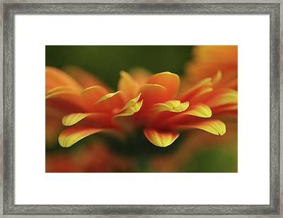 Explosion  Framed Print by Connie Handscomb