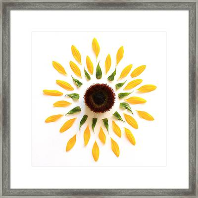 Explosion Framed Print by Jeff Bord