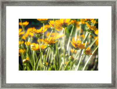 Explosion Of Yellow Framed Print