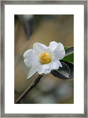 Framed Print featuring the photograph Exposed by Deborah  Crew-Johnson
