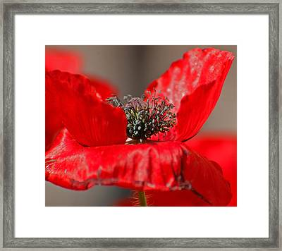 Exposed Framed Print by Jean Booth