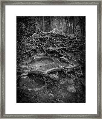 Framed Print featuring the photograph Exposed Roots by Alan Raasch