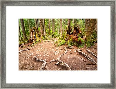 Exposed Roots Framed Print by Emilio Lovisa
