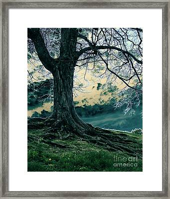 Exposed Roots Framed Print