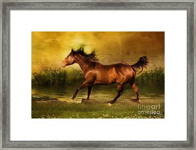 Express Framed Print by Jacque The Muse Photography