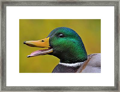 Framed Print featuring the photograph Express by Tony Beck