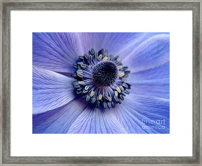 Expressive Blue And Purple Floral Macro Photo 706 Framed Print