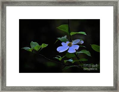 Framed Print featuring the photograph Exquisite Light by Skip Willits