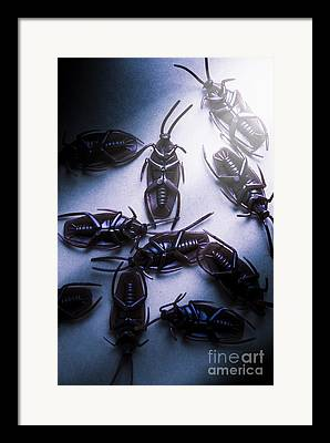 Insect Control Framed Prints