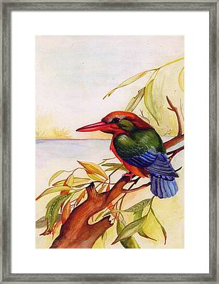 Extinct Birds The Kingfisher Framed Print by Debbie McIntyre