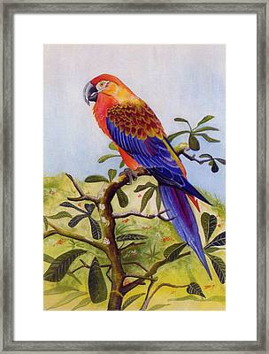 Extinct Birds The Macaw Or Parrot Framed Print by Debbie McIntyre