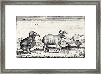 Extinct Dodo, One-horned Sheep, Red Framed Print by Wellcome Images