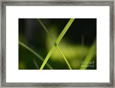 eXtraordinary Framed Print by Eva Maria Nova