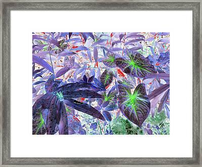 Extravagant Blue Framed Print by Rosalie Scanlon