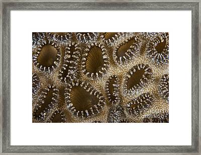 Extreme Close-up Of A Crust Anemone Framed Print