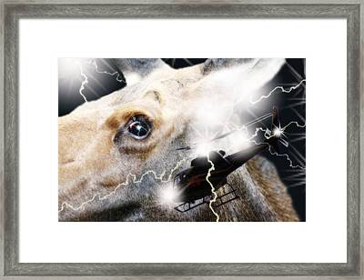 Extreme Fear Framed Print by Cathy  Beharriell