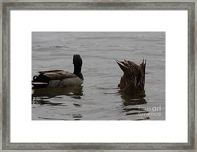 Framed Print featuring the photograph Extreme Fishing by Kim Henderson