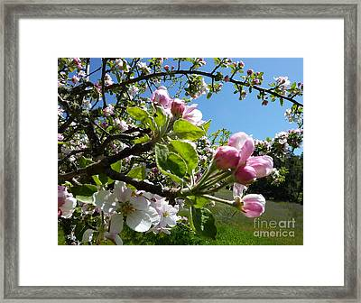 Exuberance  Framed Print by JoAnn SkyWatcher