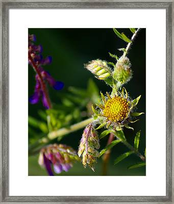 Eye Candy From The Garden Framed Print
