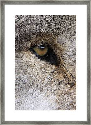 Eye Catcher Framed Print