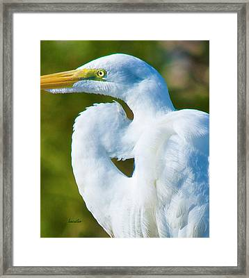 Eye-catching Framed Print by Betsy Knapp