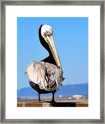 Framed Print featuring the photograph Eye Contact by AJ Schibig