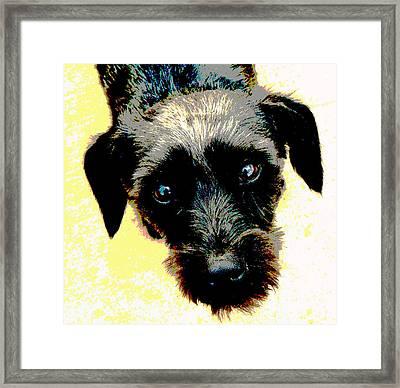 Eye Contact Framed Print by Dorrie Pelzer
