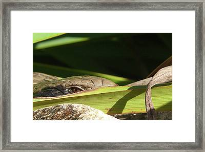 Eye Contact Framed Print by Evelyn Tambour