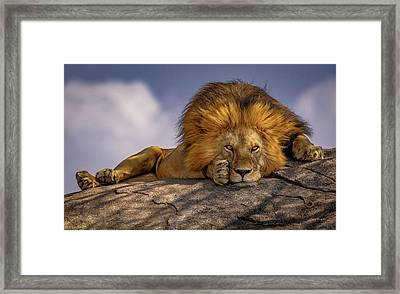 Eye Contact On The Serengeti Framed Print