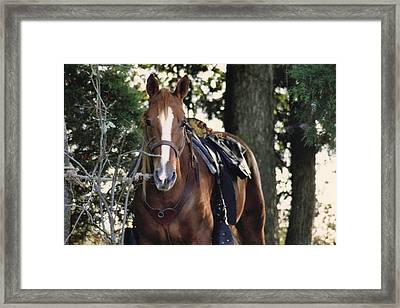 Eye Contact Framed Print by Stacy C Bottoms