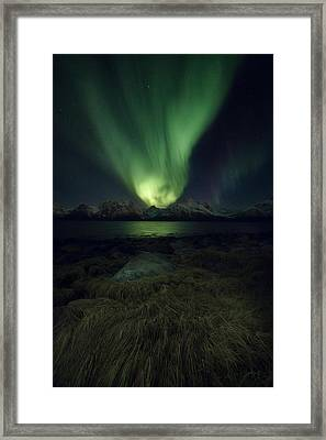 Eye In The Night Framed Print