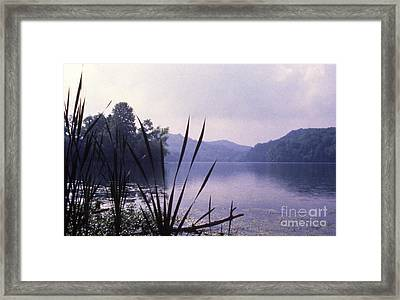 Eye-level Radnor  Framed Print by Randy Muir