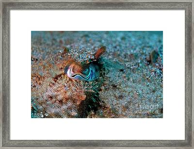 Eye Of A Common Cuttlefish Framed Print by Sami Sarkis