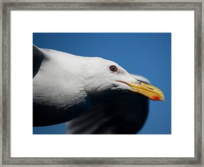 Eye Of A Seagull Framed Print