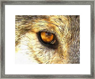 Eye Of A Wolf. Framed Print