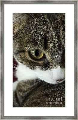 Eye Of Cat Framed Print by Bernard Jaubert