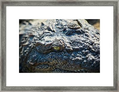 Eye Of The Beast. Framed Print by Nila Newsom