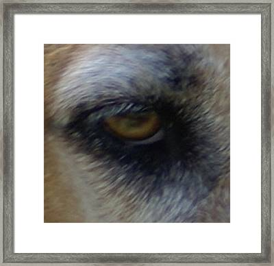 Eye Of The Beholder Framed Print by Debbie May