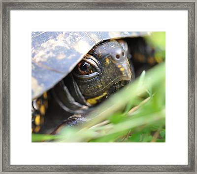 Eye Of The Beholder Framed Print by Joan Kerns