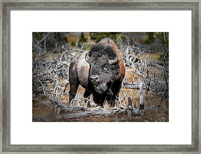 Eye Of The Buffalo Framed Print by Donna Kennedy