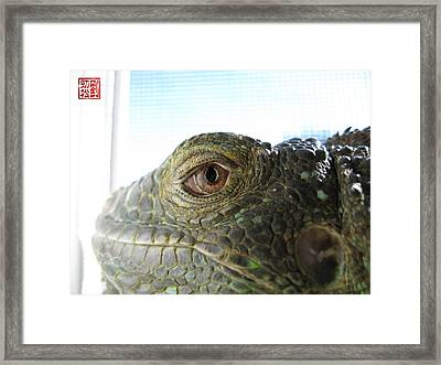 Eye Of The Dragon Framed Print