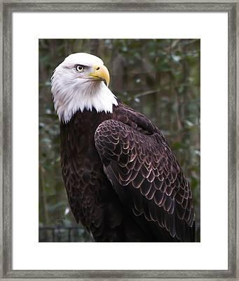 Eye Of The Eagle Framed Print by Trish Tritz