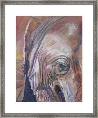 Eye Of The Elephant Framed Print