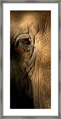 Eye Of The Elephant Framed Print by Greg and Chrystal Mimbs
