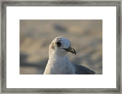Eye Of The Gull Framed Print