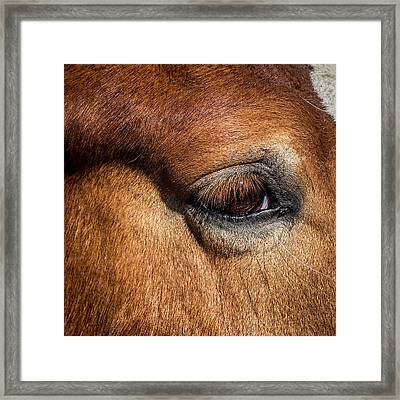 Eye Of The Horse Framed Print by Paul Freidlund