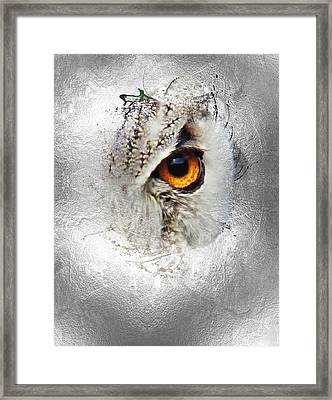 Framed Print featuring the photograph Eye Of The Owl 2 by Fran Riley