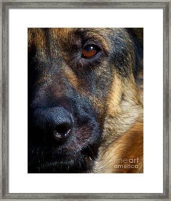 Eye Of The Shepherd Framed Print